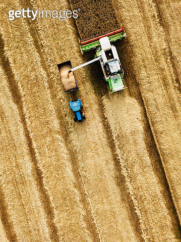 Harvesting combine on the field - gettyimageskorea