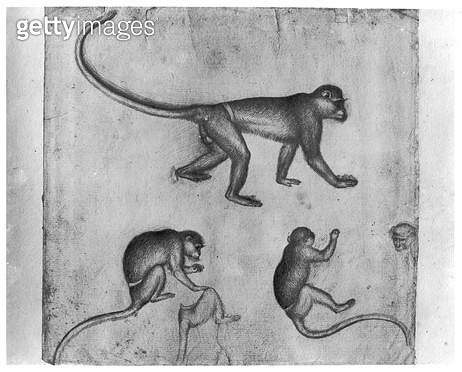 <b>Title</b> : Monkeys (pen & ink on paper) (b/w photo)<br><b>Medium</b> : pen and ink on paper<br><b>Location</b> : Louvre, Paris, France<br> - gettyimageskorea