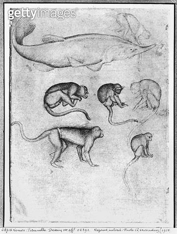<b>Title</b> : Six Monkeys and a Sturgeon (pen & ink on paper) (b/w photo)<br><b>Medium</b> : pen and ink on paper<br><b>Location</b> : Louvre, Paris, France<br> - gettyimageskorea