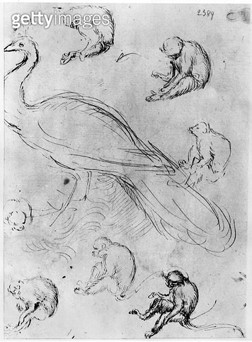 <b>Title</b> : Peacock and Six Monkeys (pen & ink on paper) (b/w photo)<br><b>Medium</b> : pen and ink on paper<br><b>Location</b> : Louvre, Paris, France<br> - gettyimageskorea