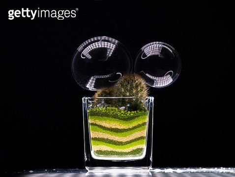 succulent plant and soap bubbles - gettyimageskorea