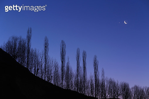 Crescent Moon and Venus in a tight conjunction above a line of trees in morning twilight. - gettyimageskorea