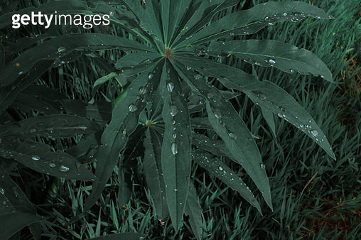 Close-Up Of Wet Plant On Field - gettyimageskorea