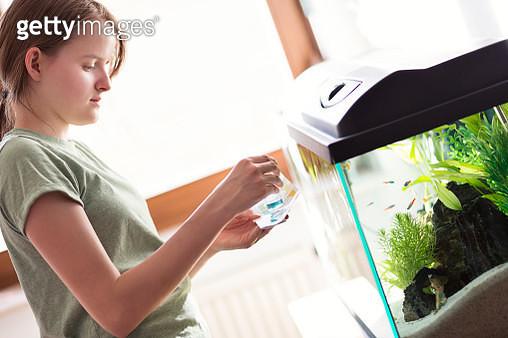 Teenage girl testing the water of a home aquarium - gettyimageskorea
