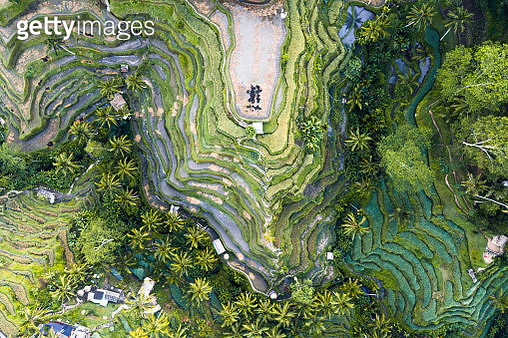 Aerial view of famous Tegalalang rice terraces, Ubud, Bali, Indonesia - gettyimageskorea