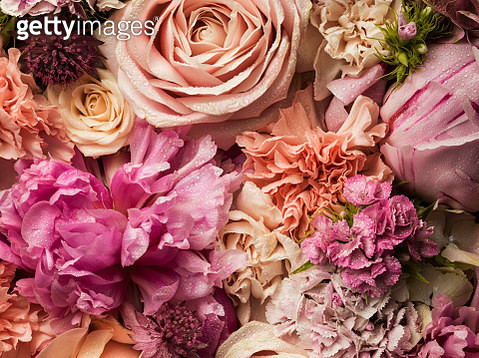 Full frame floral arrangement with dew - gettyimageskorea