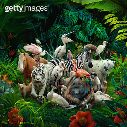 This is a photo compilation - gettyimageskorea