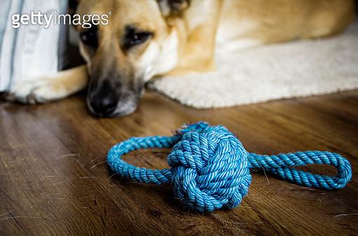 Dog's toy - gettyimageskorea