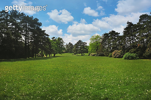 Summer meadow in a park forest - gettyimageskorea