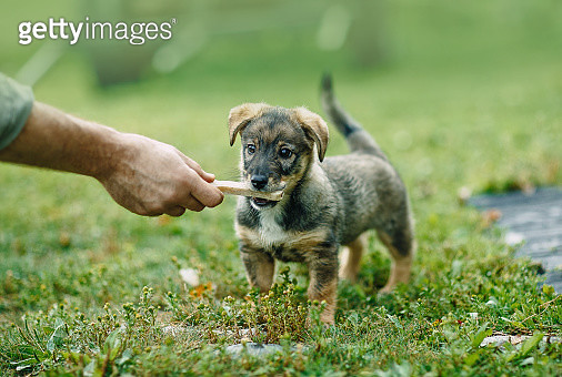 Hand handing a treat to a cute black dog - gettyimageskorea