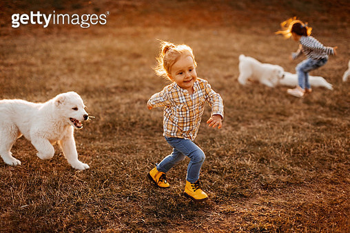 Alabai dog playing with kids i meadow - gettyimageskorea