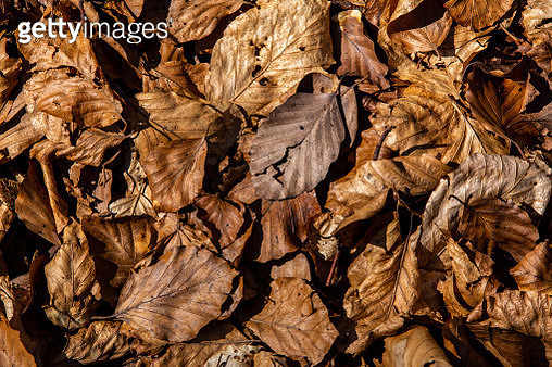 Faded leaves on the ground - gettyimageskorea