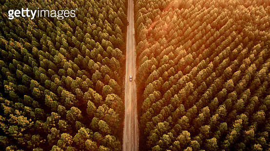 Toyota SUV driving along secluded dirt road through a pine forest plantation in Queensland Australia at sunset. - gettyimageskorea