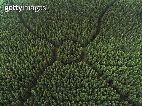 Aerial perspective of an unusual forest area, Netherlands - gettyimageskorea