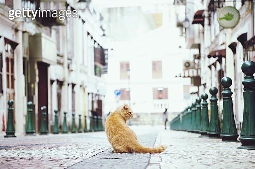 Stray Cat On Street In City - gettyimageskorea