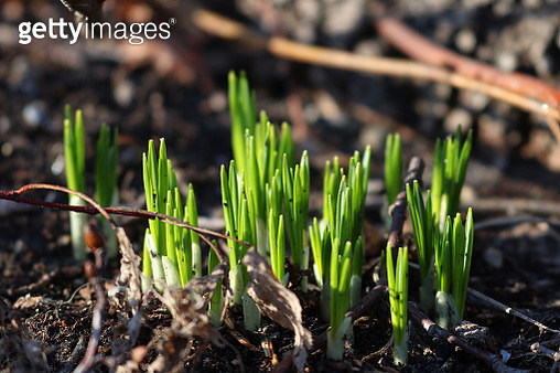 New Life Springs into Action - gettyimageskorea