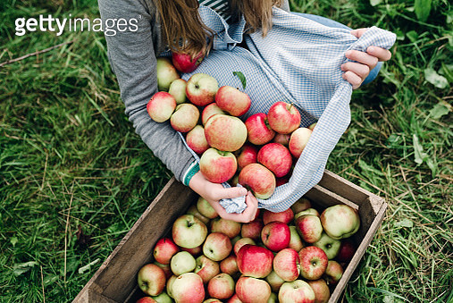 Young woman collecting apples in the fall - gettyimageskorea