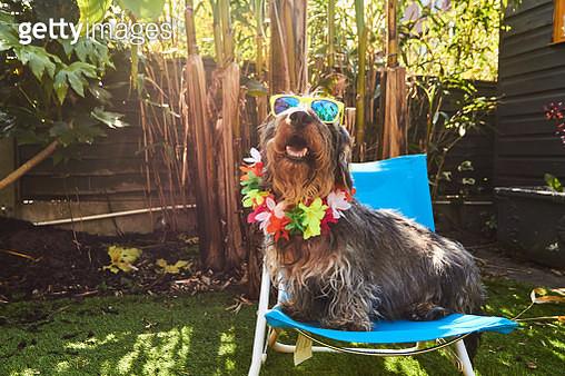 Dog wearing sunglasses - gettyimageskorea