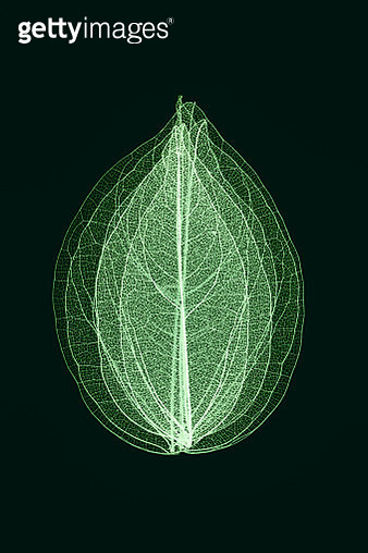 Green Toned Multi-layered Leaf Vein Skeleton Close-up Macro Shot. - gettyimageskorea