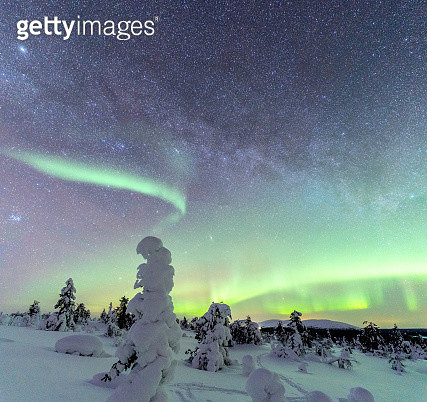 Green Aurora Borealis in the starry sky on frozen forest, Lapland - gettyimageskorea
