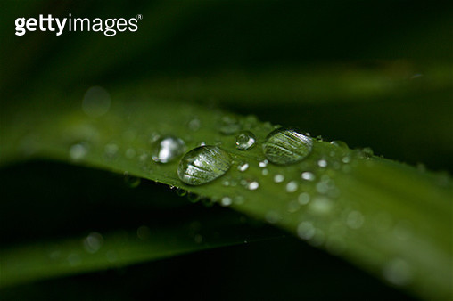 Iris Leaf with Droplets at High Resolution Showing Extreme Detail - gettyimageskorea