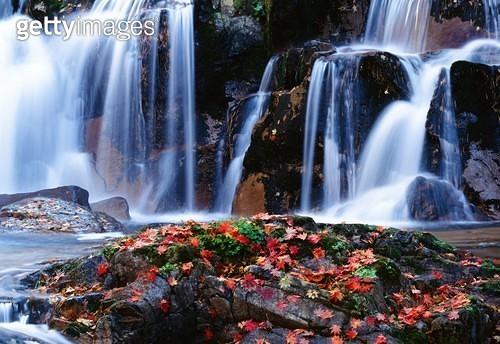 강원도 방태산 폭포,가을,낙엽,단풍 - gettyimageskorea