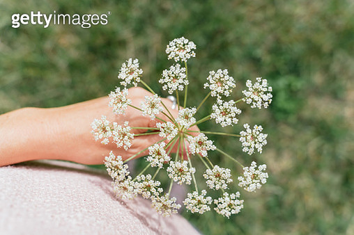 Woman holding white wildflower with hand outdoors - gettyimageskorea