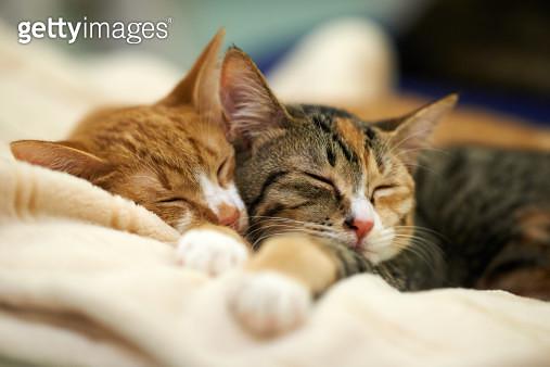 Sleeping Kittens - gettyimageskorea