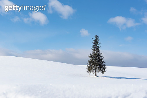 A Tree of Christmas Tree on Snow Field in Winter at Biei Patchwork Road, Biei Town, Hokkaido, Japan - gettyimageskorea