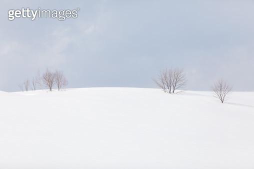언덕의 나무 - gettyimageskorea