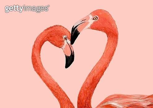 heart shaped flamingo - gettyimageskorea