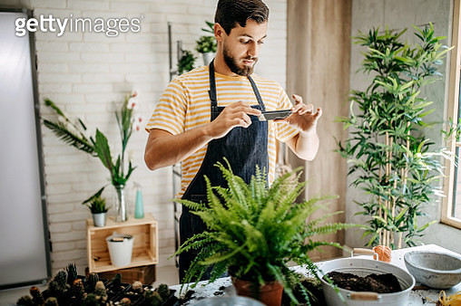 Florist taking a picture of plants when they are on beginning of their life - gettyimageskorea