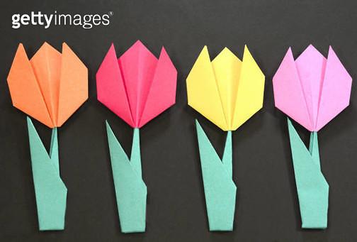 Origami Tulip Flower - gettyimageskorea