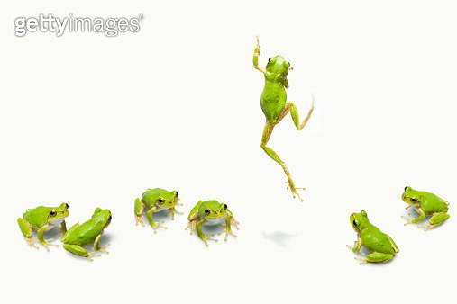 Green flog jumping - gettyimageskorea