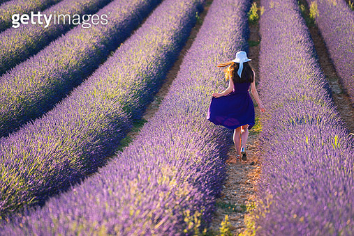 Young woman in the lavander field - gettyimageskorea