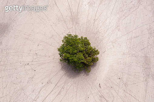 Aerial View of extreme dry land with a few trees and patterns showing drought conditions in outback Australia - gettyimageskorea