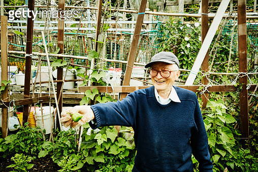 Smiling senior man holding out pepper grown in vegetable patch in community garden - gettyimageskorea