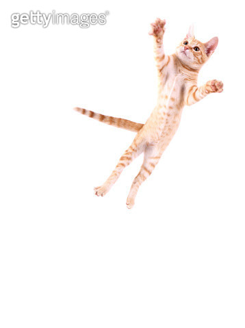 Cat Jumping - gettyimageskorea