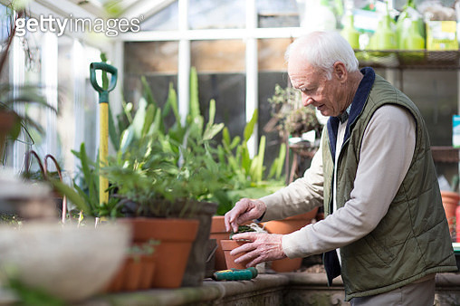 Senior man working in a greenhouse - gettyimageskorea