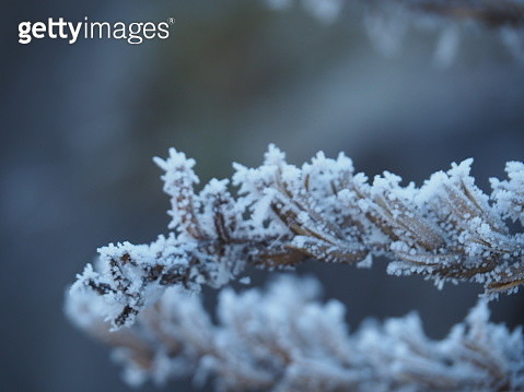 Close-Up Of White Flowers On Snow - gettyimageskorea