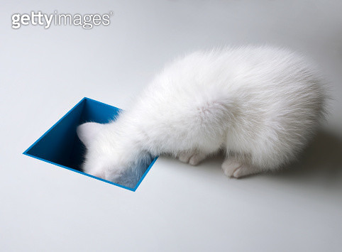 Curiousity and the kitten - gettyimageskorea