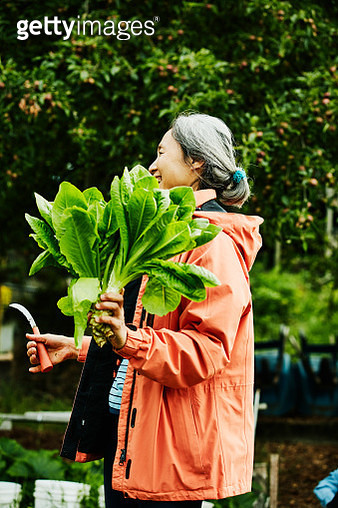 Laughing mature woman holding freshly cut greens in community vegetable garden - gettyimageskorea
