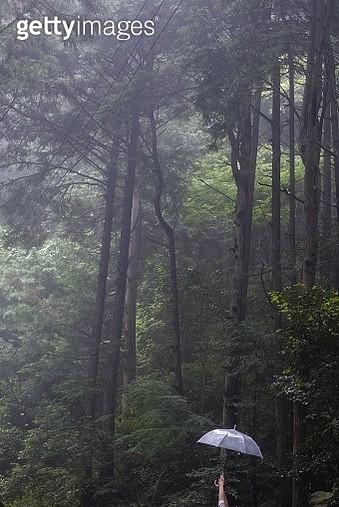 Holding umbrella in woods - gettyimageskorea