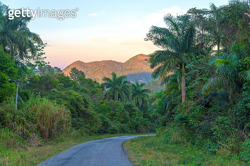 Beautiful rural scene with predominant green color on a tropical climate, Cuba - gettyimageskorea