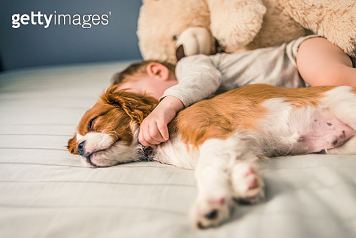 baby and the puppy sleeping - gettyimageskorea