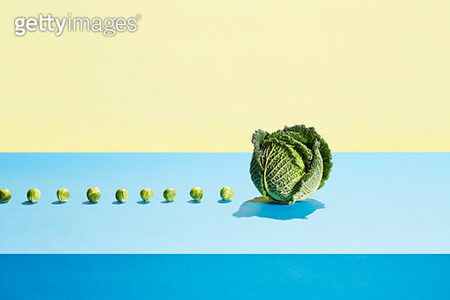 A row of small sprouts following a large cabbage - gettyimageskorea