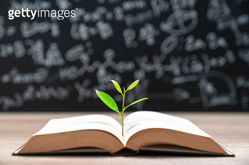 World philosophy day education concept with tree of knowledge planting on opening old big book - gettyimageskorea