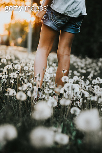 Young girl walking in a field full of dandelions - gettyimageskorea