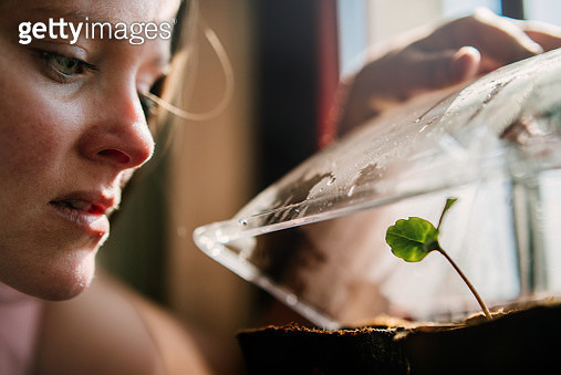 Woman looking at seedling in a little greenhouse. - gettyimageskorea