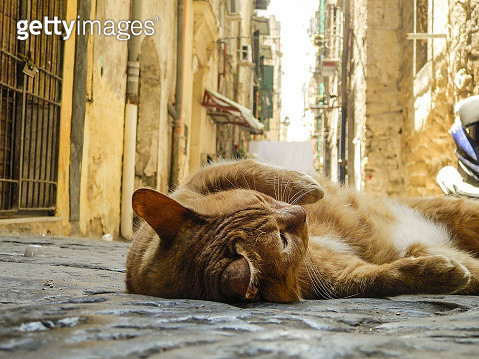 Surface Level Of Cat Lying In Alley - gettyimageskorea